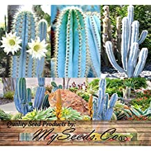 5 Packs x 30 Pilosocereus BLUE RARE Cactus Mix - CACTUS Seeds GORGEOUS BLUE - Excellent For Greenhouse Or As House Plants - COLLECTOR DREAM - By MySeeds.Co