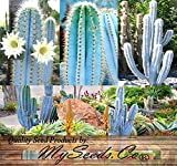 Pilosocereus BLUE RARE Cactus Mix - CACTUS Seeds - GORGEOUS BLUE Colors - Excellent For Greenhouse Or As House Plants - Quality Seeds By MS.CO (10 Packets)