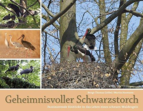Geheimnisvoller Schwarzstorch: Faszinierende Einblicke in das Leben eines scheuen Waldvogels