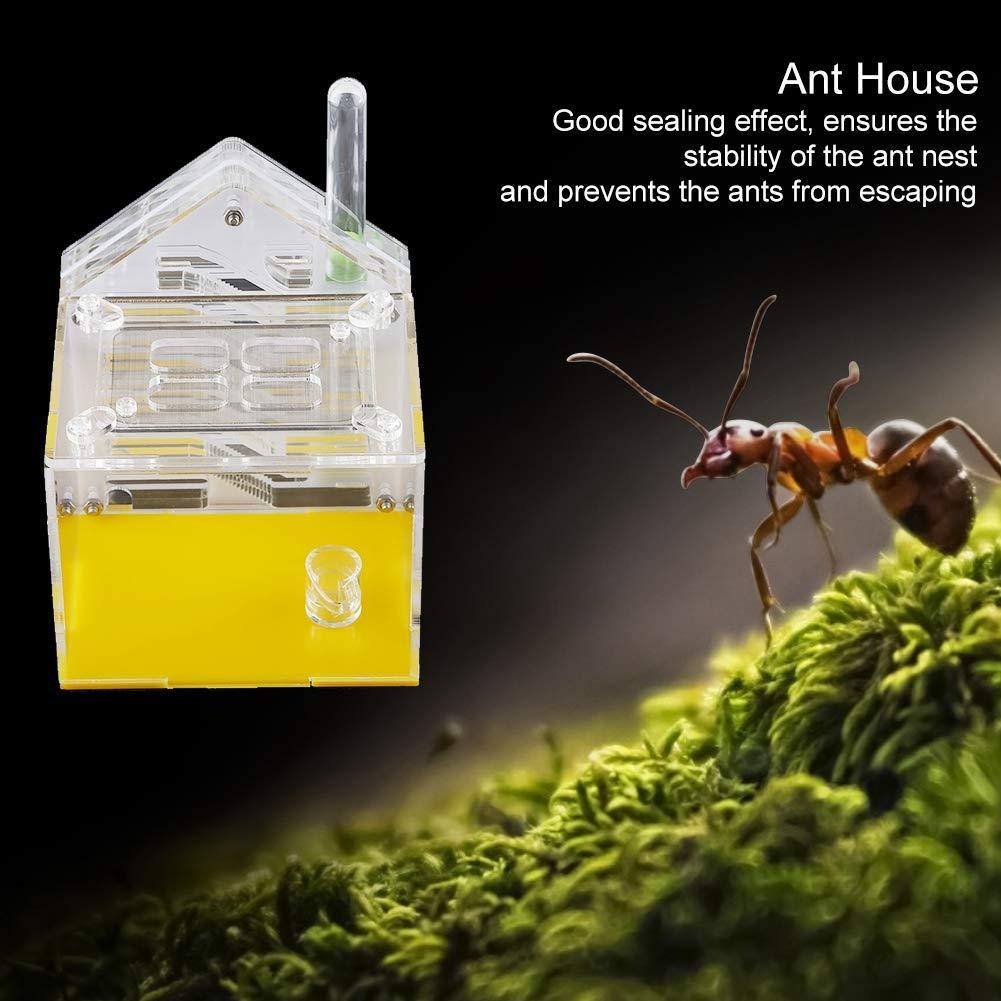 HEEPDD Acrylic Ant Nest Large Ant Castle Villa Farm House