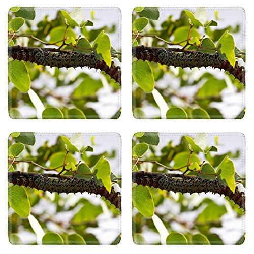 liili-square-coasters-mopane-worm-on-leaf-colourful-eat-hang-green-food-photo-20989928