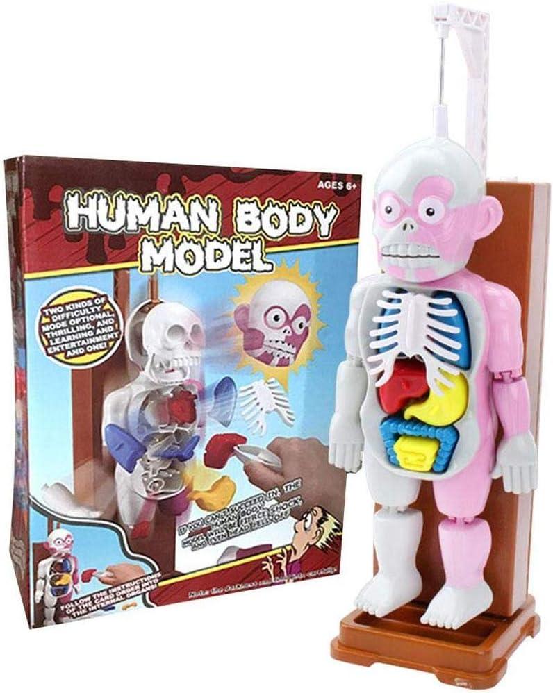 DDT Anatomía Humana Modelo Juguetes Educativos 4D Ensamblado Modelo con 16 Cartas Y Horror Sonido Efectos para Niños Niños Muchachas Escritorio Juego