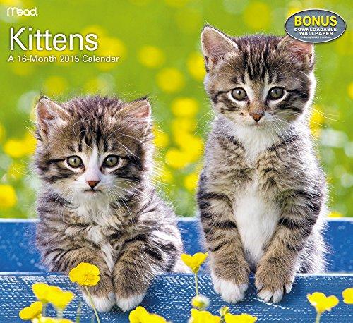 Kittens Wall Calendar (2015)