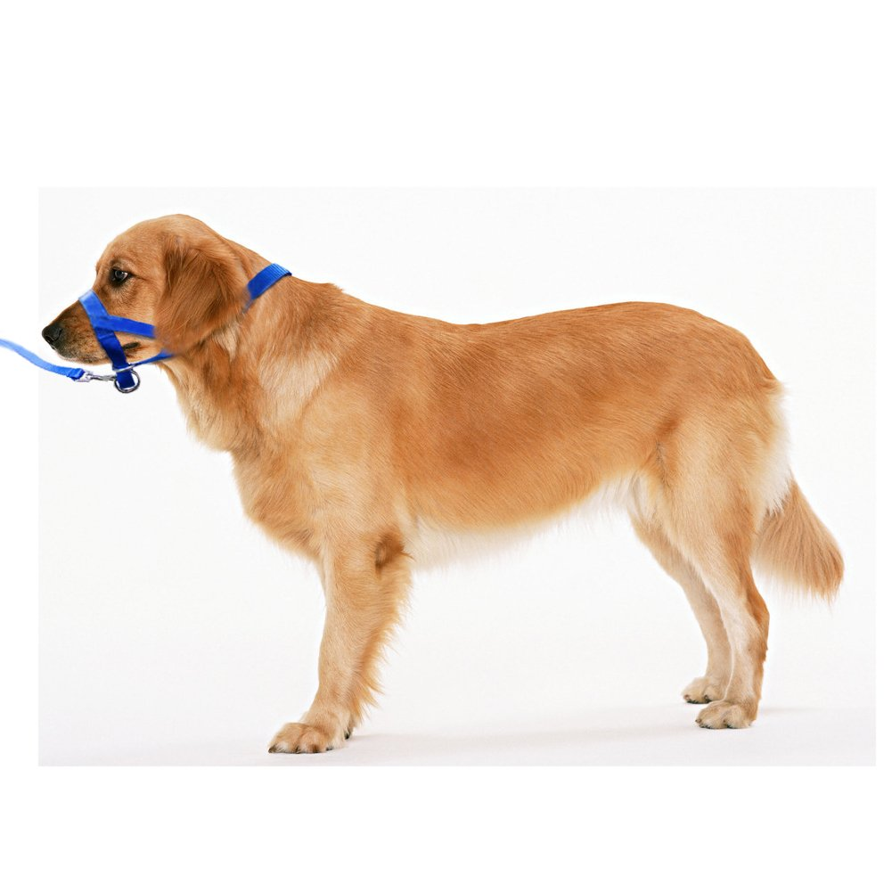 Dogs Halter Leash, Pet Dog Head Collar Gentle Leader Adjustable Loop Nylon for Training Dogs, Easy Control - Pulling and Tugging (M, Blue)