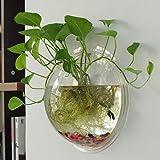 Sweetsea Creative Acrylic Hanging Wall Mount Fish Tank Bowl Vase Aquarium Plant Pot Fish Bubble Aquarium Decor - Clear (Medium)