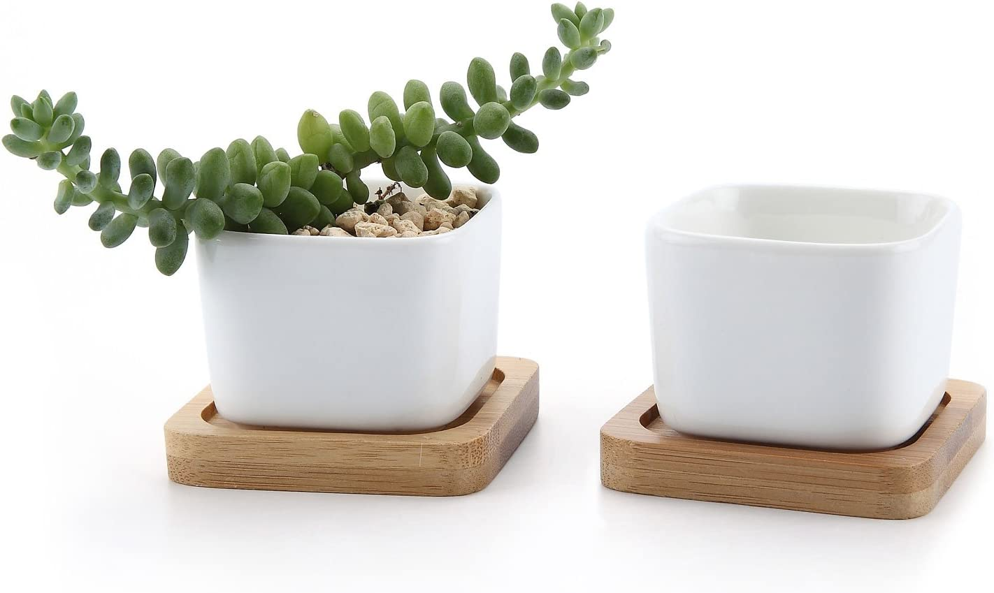 Amazon Com T4u 2 Inch Small White Succulent Planter Pots With Bamboo Tray Square Set Of 2 Ceramic Succulent Air Plant Flower Pots Cactus Faux Plants Containers White Modern Decor For Home And