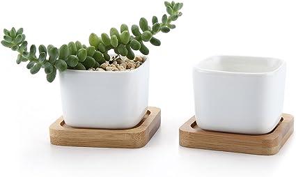 White with tan square vase succulent flower pot