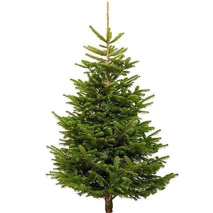 Gardenersdream Nordmann Fir Fresh Cut Christmas Tree Real Live