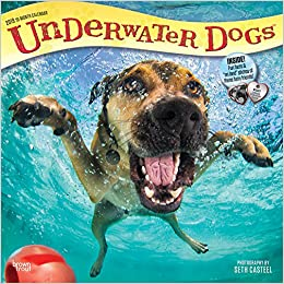underwater dogs 2019 12 x 12 inch monthly square wall calendar pet humor puppy multilingual edition