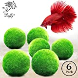 Luffy Betta Balls : Live Round-Shaped Marimo Plant : Natural Toys Betta Fish