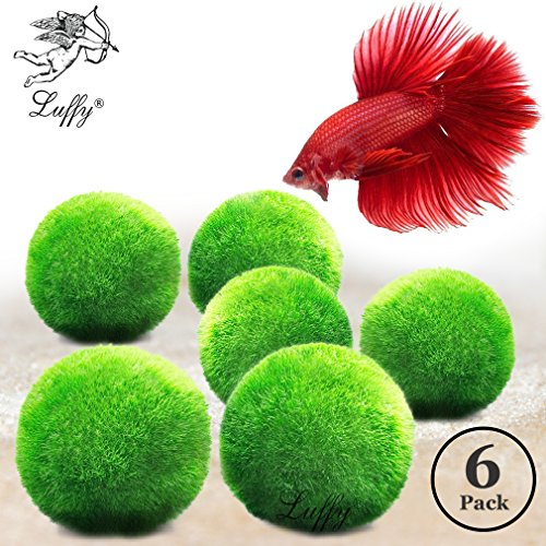 Luffy Betta Balls : Live Round-Shaped Marimo Plant : Natural Toys Betta Fish by Luffy