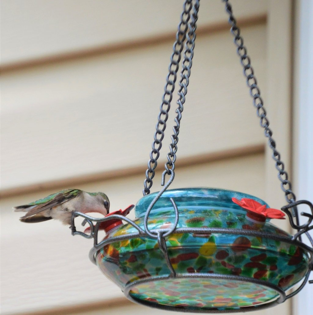 Amazon Wild Wings WWGHF1 Top Fill Hummingbird Feeder Blue Sunset Garden Outdoor