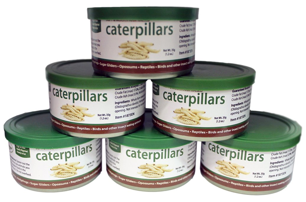 Canned Caterpillars (1.2 oz. 6 Pack) - Healthy High Protein Insect Treat - Hedgehogs, Sugar Gliders, Reptiles, Wild Birds, Chickens, Lizards, Bearded Dragons, Skunks, Opossums, Fish, Amphibians by Exotic Nutrition