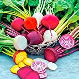 David's Garden Seeds Beet Rainbow Mix SL119BE (Multi) 200 Heirloom Seeds