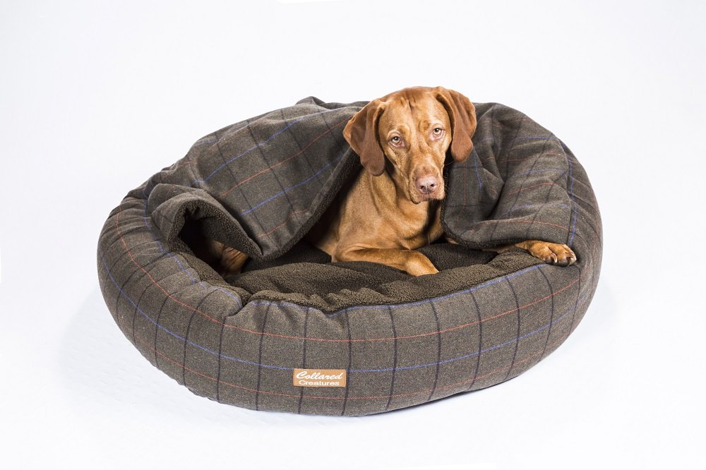 Collared Creatures - Cama para perro con forma de cueva, 900 mm, color verde: Amazon.es: Productos para mascotas