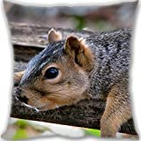 HARLAN Custom Zippered Throw Pillow 60x60cm(24x24inch) Super Large Size 900g(1.98lb) (Twin sides Print)- squirrel down rest Leaning Cushion