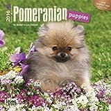 Pomeranian Puppies 2016 Mini 7x7 (Multilingual Edition)
