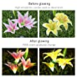Yunlights Decorations Multi Color Changing Decoration 4