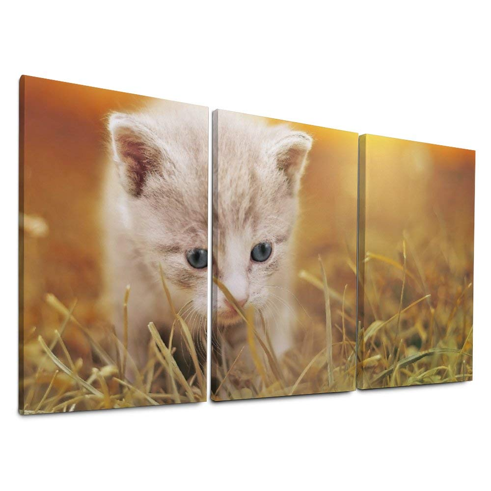 NOAON Wood Framed Cat Baby Kitten Pet Ready to Hang Canvas Prints Office 12 x 24 Inch x 3 Pcs for Home Decor Wall Art by NOAON