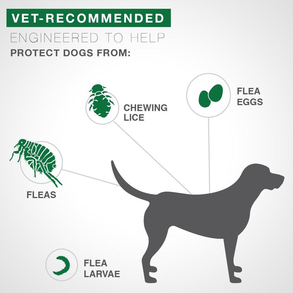 Bayer Advantage II Extra Large Dog 6Pack by Bayer Animal Health (Image #2)