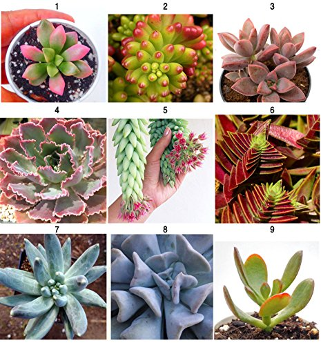 9 fresh succulent leaves from 9 different plants