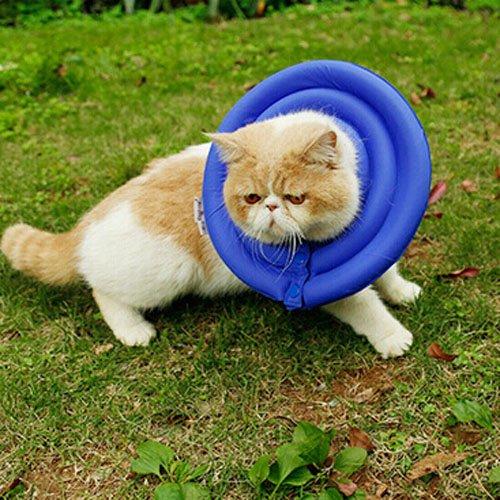 kitten academy dj