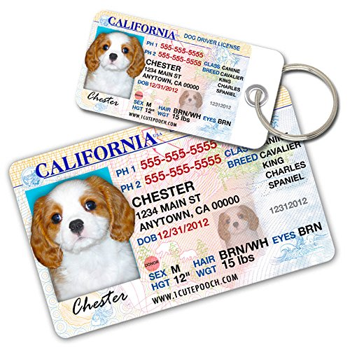 License Pet Tag - California Driver License Custom Dog Tags for Pets (2) and Wallet Card - Personalized Pet ID Tags - Dog Tags For Dogs - Dog ID Tag - Personalized Dog ID Tags - Cat ID Tags - Pet ID Tags For Cats