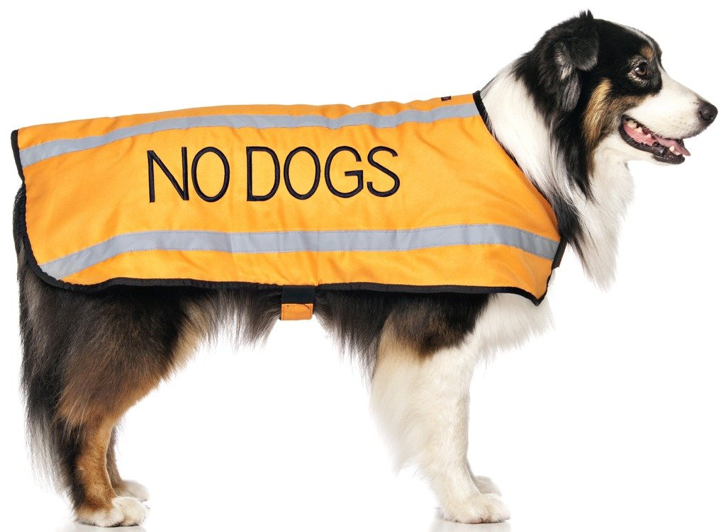 L-XL Back 23\ NO Dogs orange (Not Good with Other Dogs) Warm Dog Coats S-M M-L L-XL Waterproof Reflective Fleece Lined Prevents Accidents by Warning Others of Your Dog in Advance (L-XL Back 23  (59cm)