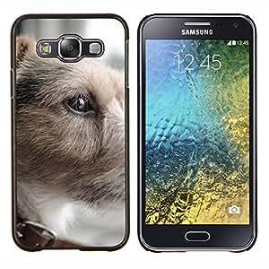 TECHCASE---Cubierta de la caja de protección para la piel dura ** Samsung Galaxy E5 E500 ** --Parson Russell Terrier pequeño perro de pelo corto