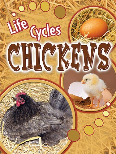 life cycle of a chicken - 4