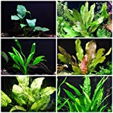 Rooted Live Aquarium Plant Bundle - 6 Easy Species | Snail Free Guaranteed