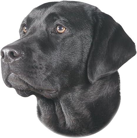 Nobby Aufkleber Labrador Schwarz Gelb 12 X 3 5 Cm Haustier