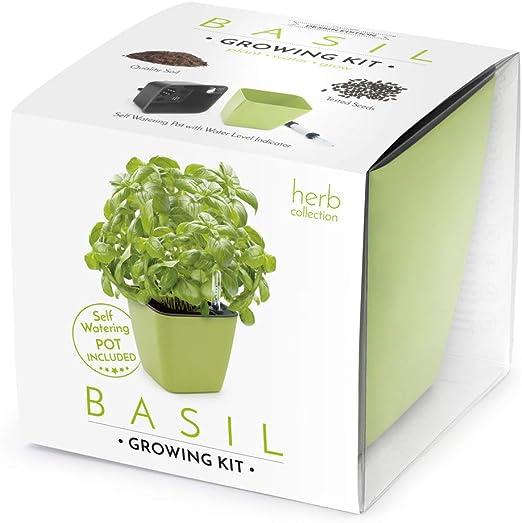 Domestico Kit de ALBAHACA para cultivar, Basil Growing Kit, All-In ...