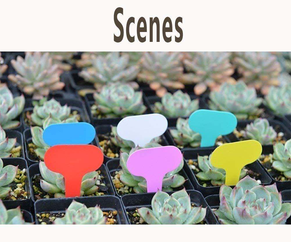 Plantas Reutilizable Etiquetas DXIA 180 Piezas Planta Marcadores Etiquetas y Marcadores de Pl/ástico Multicolor Marcadores de Pl/ástico en Forma de T Plantas Accesorios de Jardiner/ía