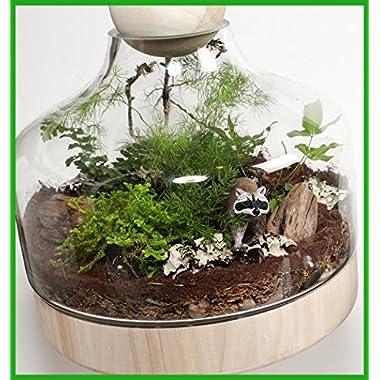 Lucky Gardener Deluxe DIY Terrarium Kit