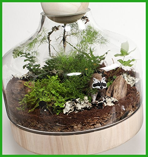 Lucky Gardener Deluxe DIY Terrarium Kit by Twig Terrariums