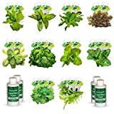 AeroGarden Great Greens Seed Pod Kit (for Farm/Farm Plus Models)