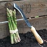 Burgon and Ball Asparagus Knife - 5 Y...