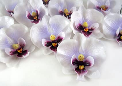 Amazon 100 small white purple phalaenopsis orchid silk flower 100 small white purple phalaenopsis orchid silk flower heads 2quot artificial mightylinksfo