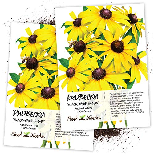 (Seed Needs, Black-Eyed Susan (Rudbeckia hirta) Twin Pack of 1,500 Seeds Each)