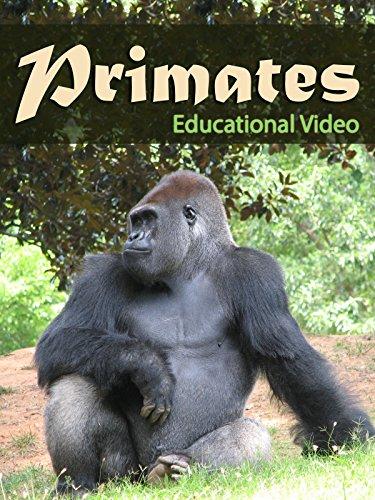 Gibbon Monkey - Primates