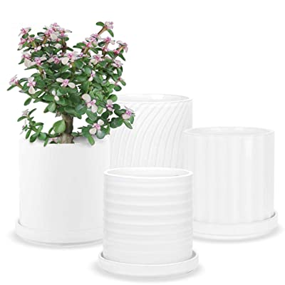 Plant Pots - 4.1 Inch Cylinder Ceramic Planters with Connected Saucer, Pots for Succuelnt and Little Snake Plants, Set of 4, White: Garden & Outdoor