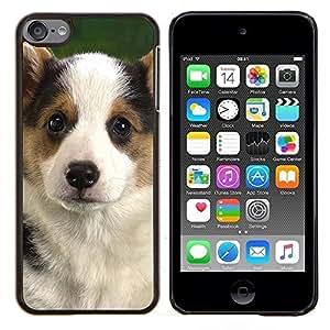 EJOOY---Cubierta de la caja de protección para la piel dura ** Apple iPod Touch 6 6th Touch6 ** --Corgi Pembroke Perrito del perro de Gales
