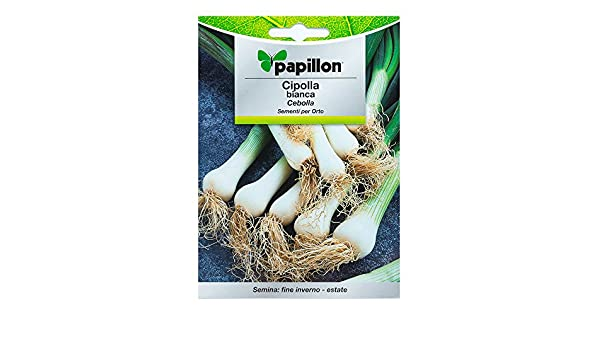 Semillas Cebolla Blanca (4 Gramos): Amazon.es: Jardín