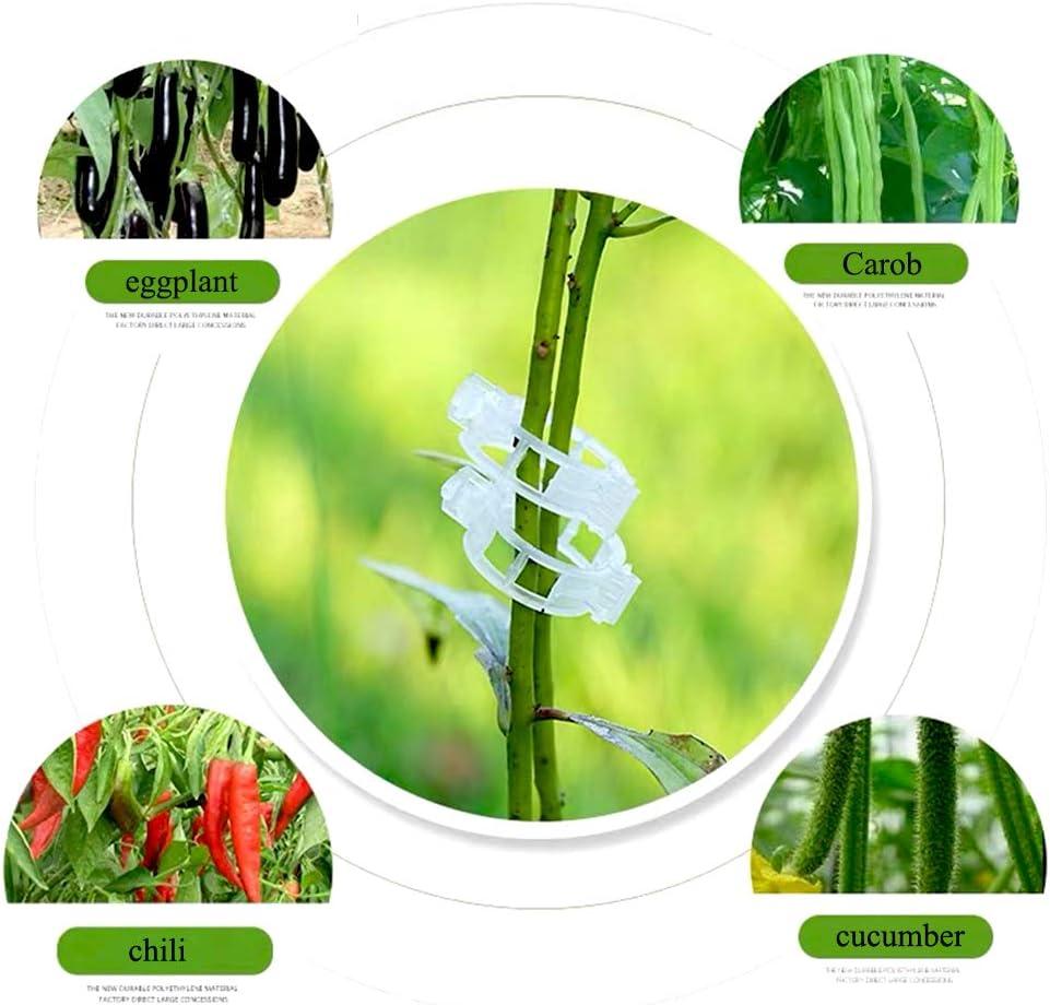 Pflanzen Aufrecht und Ges/ünder zu Werden 100 Kunststoff Pflanzen Clips Pflanzenklammern Stabile Clip 100 Pflanzen Pfropfen Clip Tomatenclip Pfropfclip f/ür Pflanzen Sicherung Unterst/ützt Einzupflanzen