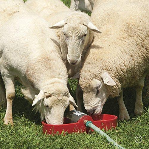 Kane Small Livestock & Poultry Portable Waterer