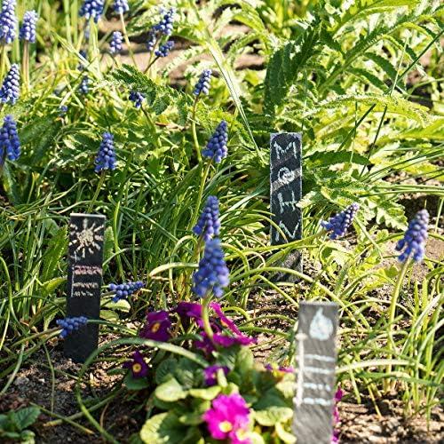 Navaris Set de 10 marcadores para Plantas de Pizarra S - Etiquetas ...