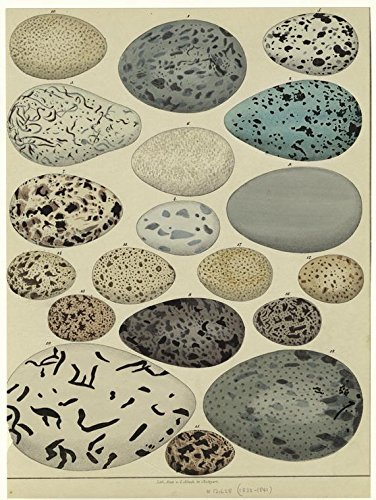 Vintage Eggs Reproduction Printed Art Images #103 Collage Sheet 8.5 x ()