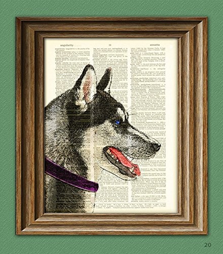 Siberian Husky dog breed illustration beautifully upcycled dictionary page book art print