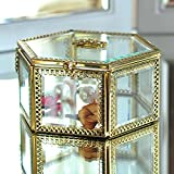 Hexagonal Clear Glass & Brass Metal Hinged Top Lid Plant Terrarium Box / Tabletop Display Case